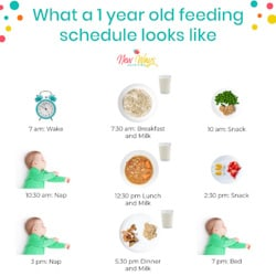 Year Old Schedule | New Ways Nutrition
